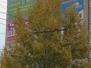 Симферополь  и тролейбус в Ялту